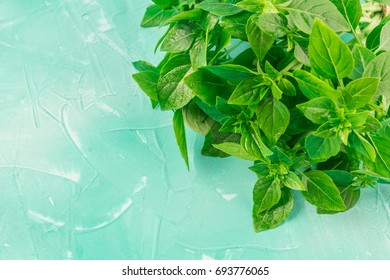 A bunch of green lemon basil on a blue background.