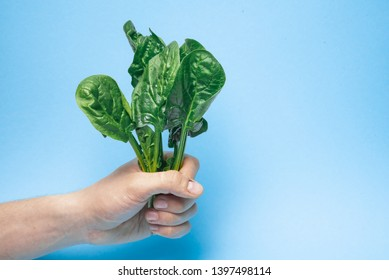 A bunch of green seasonal spinach in his hands on a holo-background, a bunch of spinach on a colored background, spinach on a holo-background