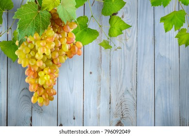 Bunch hanging grapes with green leaves against background light blue wooden wall made boards. Copy space