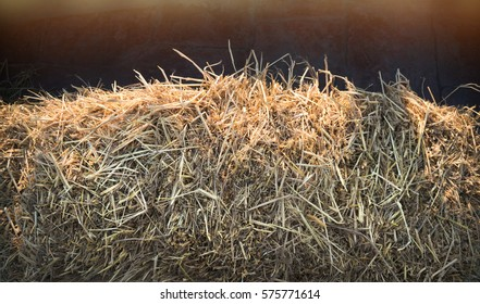 Bunch of hay, bale or thatch stack to feed the animal in the farm