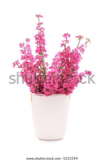 bunch of heather in vase isolated on white