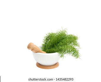 Bunch of herbal plant Equisetum arvense the field horsetail or common horsetail in white mortar and tea infusion next to it, yellow background with copy space. Herbal remedy concept.