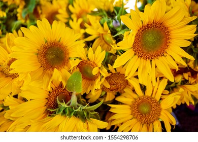 A bunch of large sunflowers for sale at a market stall