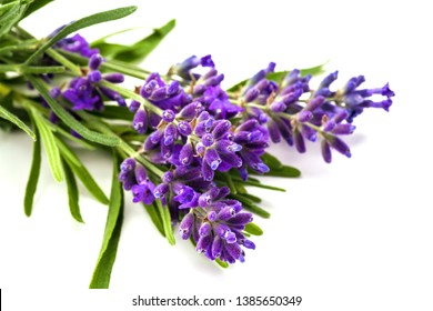 Bunch of lavander isolated on white