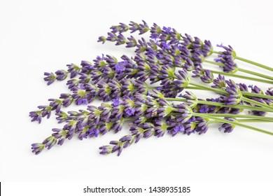 bunch of lavender blossoms - lavandula angustifolia