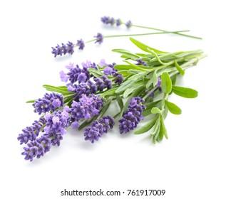 Lavender Flower Images Stock Photos Vectors Shutterstock