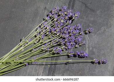 bunch of lavender on slate background