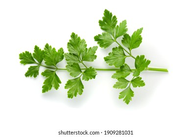 Bunch leaves parsley isolated on white background
