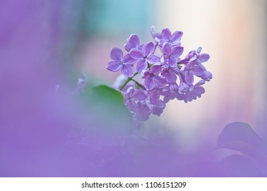Bunch of lilac flowers on a blurred background.