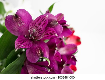 A bunch of lilies in purple.  The botanical name is Alstroemeria, but commonly known as Lily of the Incas or Peruvian Lilies.