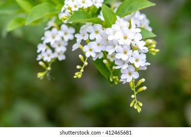 Little white flower images stock photos vectors shutterstock bunch of little white flowers mightylinksfo