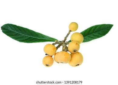 a bunch of loquat medlar isolated on white background