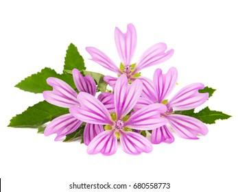 Bunch of mallow flowers isolated on white. Malva sylvestris