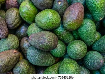 bunch of many green avocado close up