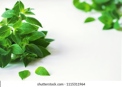 bunch of mint closeup. background with mint sprigs. mint on white background. copy space. mint and place for text.