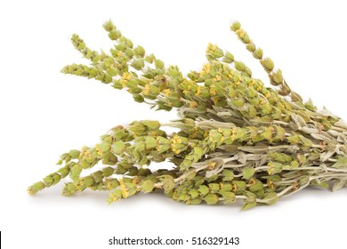 Bunch of mountain tea Malotira isolated on white. Greek traditional herbs