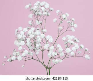 Bunch od baby's-breath flowers on a  light pink background