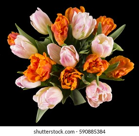Bunch of orange and pink tulips in a black background.
