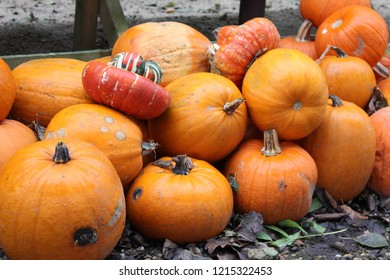 Bunch of orange pumpkins stacked in a pile