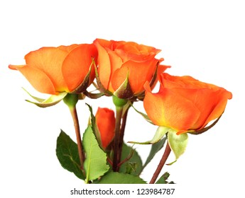 a bunch of orange roses on white background