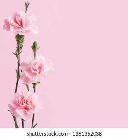 Bunch of pink carnations on background, soft pastel colors