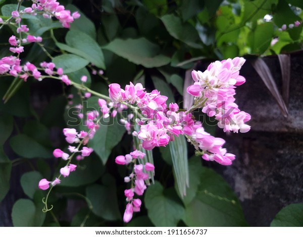 Bunch of pink color flower as a wallpaper