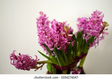 Bunch of pink hyacinths