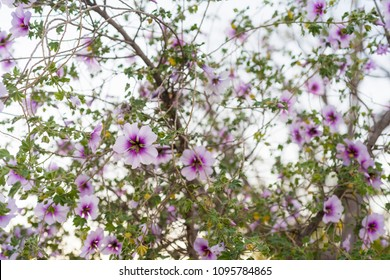 Bunch of pink and purple  blooming flowers