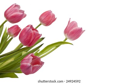 Bunch of pink tulips on white background with copy space. Clipping path incl.