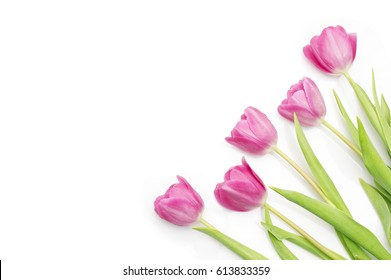bunch of pink tulips on white