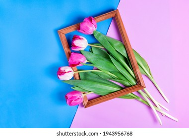 Bunch of pink tulips in picture frame on blue and pink geometric background. Top view. Conceptual photo