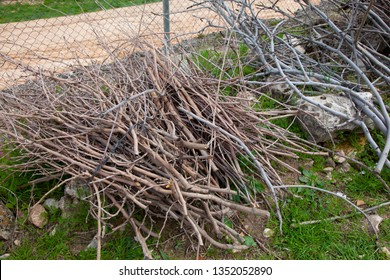 bunch of pruned, piled and tied branches. Prepared to be burned to use as a chamber and thus to have what to light the fire throughout the winter.