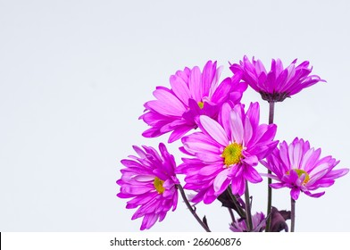 Bunch of purple daisies