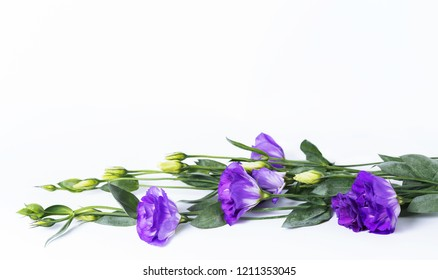 Bunch of purple eustoma flowers (prairie gentian, lisianthus) lying on white background. Fresh open flowers and close buds on a twig. Beautiful floral mockup. Can be used as a greeting card.