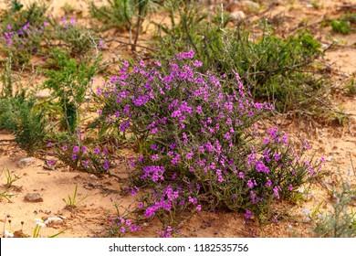 Bunch of purple flowers growing wild in the field