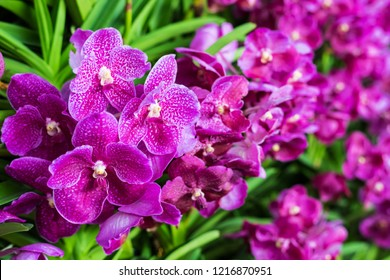 Bunch of purple orchid flowers