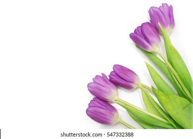 bunch of purple tulips on white