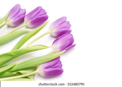 bunch of purple tulips on white background