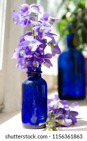Bunch of purple violets in a cobalt bottle vase on a sunny windowsill with more violets laying down in front and another cobalt bottle with green leaves in the background.