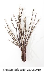 a bunch of pussy willow twigs with white background
