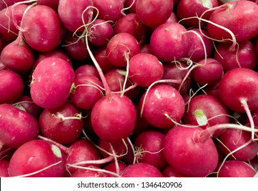Bunch of radishes. Freshly harvested, purple colorful radish. Growing radish. Growing vegetables. Healthy food background. European radishes (Raphanus sativus)