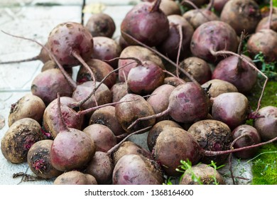 A bunch of red beets without tops outdoors