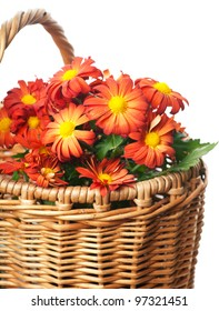Bunch of red chrysanthemums in a basket over white background