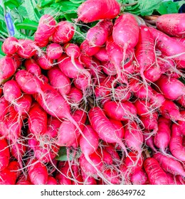 Bunch of red radishes at Puyallup Farmer Market, Puyallup, Washington, USA. A close up full frame of Rainier red radishes.