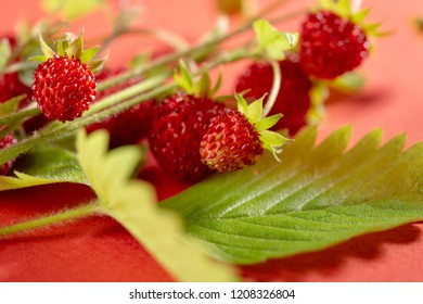 Bunch of ripe forest strawberries
