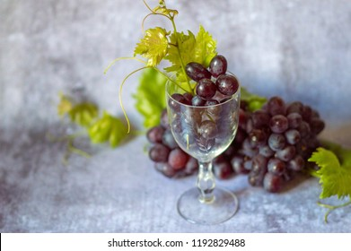 Bunch of ripe red grapes with a vine and a glass with a bunch of grapes isolated on gray background
