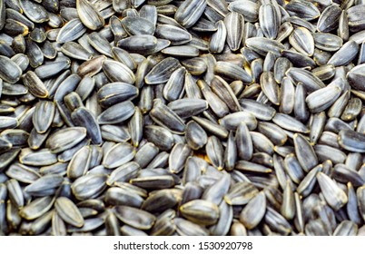 a bunch of roasted sunflower seeds.Composition of sunflower seeds, serving for cooking oil. The concept of nuts