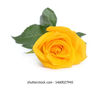 Bunch of rose flower on white background