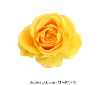 Yellow roses images stock photos vectors shutterstock bunch of rose flowers on white background mightylinksfo