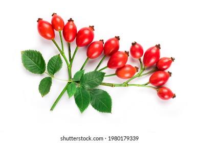 bouquet de rosiers avec feuilles isolées sur blanc